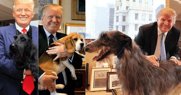 Donald Trump dogs